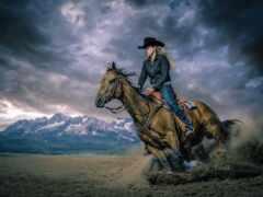 лошадь, rodeo