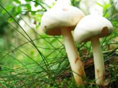 музыка, mushrooms, frases