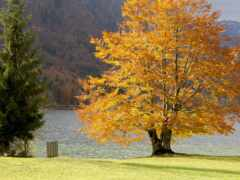дерево, гора, трава