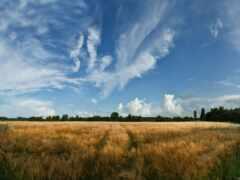 природа, поле, benzokos