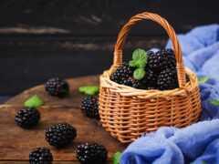 blackberry, корзина, meal
