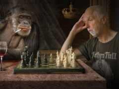 chess, art, обезьяна