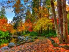 природа, осень, тв