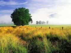 профессиональны, трава, фотографий