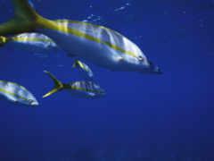 fish, water, тоби
