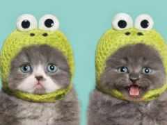 cats, шапках, коты