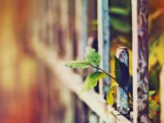 art, люди, fences