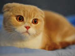 кот, cats, морды