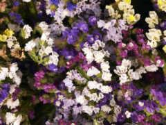 garden, первоцвет
