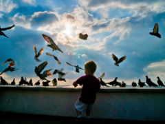 птицы, небе, небо