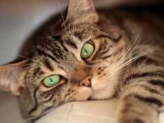 глаз, зелёный, смотреть
