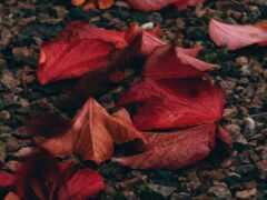 осень, life, indir