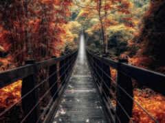 мост, осень, китаянка