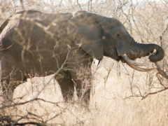slon, ветки