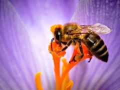 пчелка, subscribe, цветы