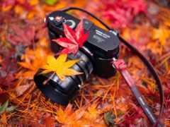 фотоаппарат, пасть, листья