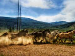 лошадь, табун, caballo