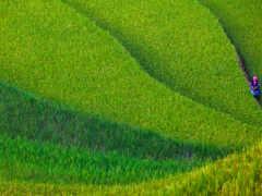 поле, сделать, рис