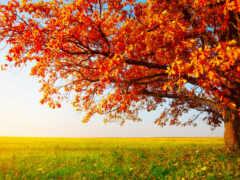 дерево, осень, природа