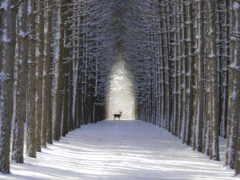 лес, oir, winter