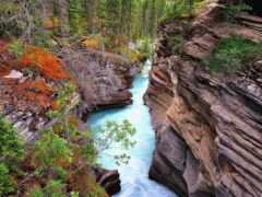 athabasca, пасть, природа