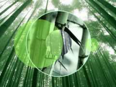 бамбук, лес, япония