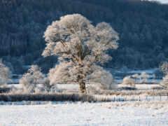 tapetum, winter, tapety
