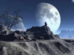 волков, волки, овцы
