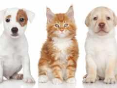 собака, щенок, кот