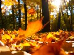 autumn, leaves Фон № 33596 разрешение 2560x1600