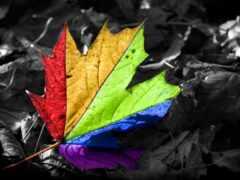 color, maple, лист