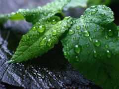 зелёный, лист, упал