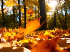 осень, нью, сфер