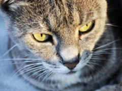 gato, тварини, подборка