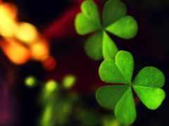 clover, зелёный, макро