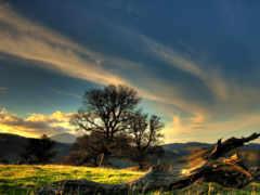 природа, красивые, дерево