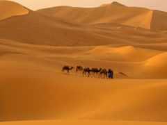 пустыня, сахара, картинка