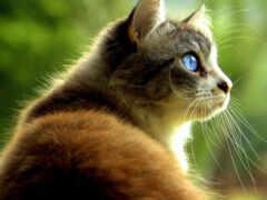 кот, pet, glance