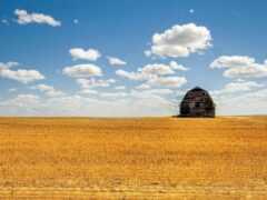 поле, barn, облако
