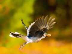 птица, fly, weed