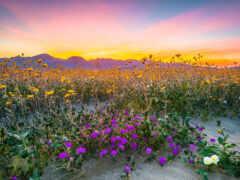 landscape, природа, закат