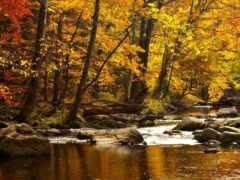 природа, осень, леса Фон № 98577 разрешение 1920x1200