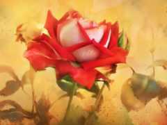 cvety, розы, рисованные