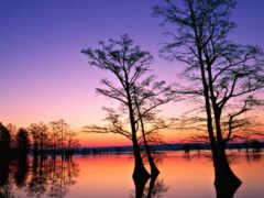 trees, закат, sfondi