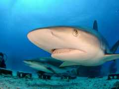 акула, white, акваланг