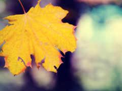thu, mùa, hành