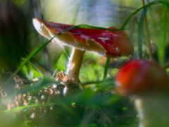 mushroom, лес, грибы