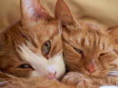 кот, cats, eyes