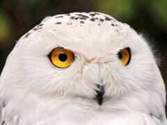 взгляд, сова, animal