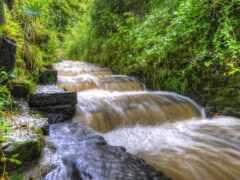 tributary, лист, ветра